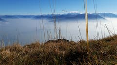 Am Rand des Nebelmeeres auf dem Hohen Kasten. (Bild: Klaus Businger)