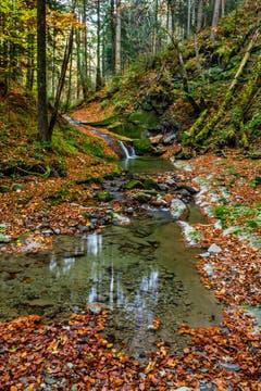 Ein Wasserfall voller Laub am Moosbach. (Bild: Matthias Rozinek)