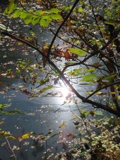 Herbst-Spiegelung im Eichweiher ob St.Gallen. (Bild: Paul Sanwald)