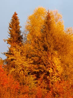 Im Abendrot strahlt die Herbststimmung. (Bild: Reto Schlegel)
