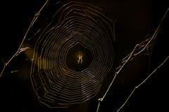 Eine Spinne wartet im Sonnenuntergang auf Beute. (Bild: Matthias Rozinek)