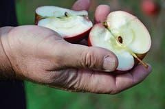 Mit der Zucht von Obstbäumen hat Markus Kobelt begonnen. Sie ist auch heute noch ein wichtiges Standbein.