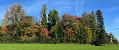 Auf dem Dorfhügel in Wittenbach thront das Schloss Egg hinter den Herbstbäumen, das schon hier stand bevor es Wittenbach gab. (Bild: Walter Schmidt)