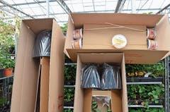Der Online-Verkauf macht einen immer grösser werdenden Anteil am Umsatz von Lubera aus. Die Pflanzen werden gut verpackt verschickt.