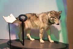 Neben jedem der zehn Tiere in der Ausstellung finden sich schriftliche Angaben und ein Lautsprecher, den man per Zauberstab zum Klingen bringen kann.