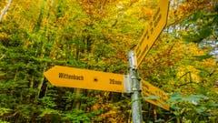 Der sonnige Herbst lädt überall zum Wandern ein, auch am Sitter Strandweg bei Wittenbach. (Bild: Stefan Truffer)