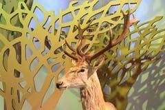 Auch wenn der Bezug zu Grimm-Märchen etwas schwach ist, darf der Hirsch, der König des Waldes, im Märchenwald im Naturmuseum natürlich nicht fehlen.