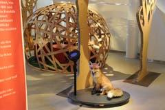 Blick in die Ausstellung, die ursprünglich vom Naturmuseum Winterthur kreiert wurde. Hinter dem Fuchs ist eines der beiden Nester zu erkennen, in denen man Märchen hören kann. (Bild: Naturmuseum Winterthur)