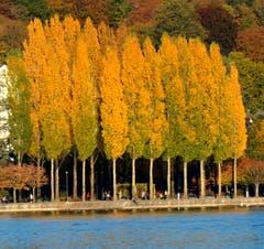 Wenn die Abendsonne die Blätter goldig färbt. Europaplatz mit Blick Richtung Carl Spitteler Quai. (Bild: Walter Buholzer)