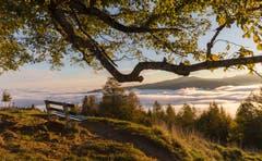 Morgenstimmung über dem Nebelmeer auf dem Zugerberg. (Bild: Daniel Hegglin)
