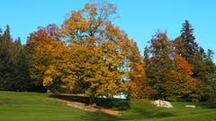 Der letzte Herbsttag in seiner vollen Pracht und Schönheit. (Bild: Franz Stalder)