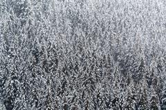 Frisch verschneite Nadelbäume bei Grindelwald. (Bild: Anthony Anex/Keystone (28. Oktober 2018))