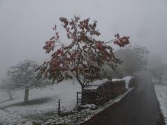 Der Kirschbaum in Hohlenstein, Mosnang, trotzt als einziger Farbtupfer dem Wintereinbruch. (Bild: Hubert Koch)