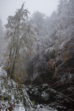 Winterstimmung im Brüeltobel. (Bild: Franz Häusler)