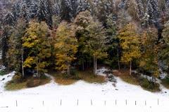 Frisch verschneite Landschaft bei Burglauenen. (Bild: Anthony Anex/Keystone (28. Oktober 2018))