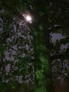 In der Nacht wenn der Mond wacht. (Bild: Reto Schlegel)