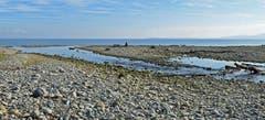 Der längere Flusslauf der Steinach. Bedingt durch den Niedrigwasserstand des Bodensees. (Bild: Walter Schmidt)