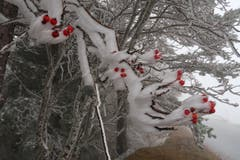 Erster Schnee auf dem St. Anton. (Bild: Irene Weibel)