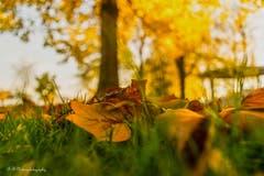 Im Jakob Zuellig Park in Arbon: Der schöne Herbst aus der Käferperspektive. (Bild: Regina Rosin)