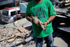 Sa'adon Lawira hält die Katze seines Enkelsohns. Der Grossvater fand den leblosen Körper seines Enkels dank dem Miauen der Katze und den Trümmern seines Hauses in Palu. (Bild: AP Photo/Dita Alangkara)