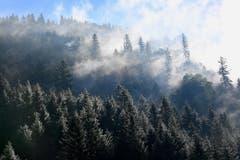 Eine mystische Mischung aus etwas Schnee, Sonne und Nebelschwaden im Murgtal. (Bild: Klaus Stadler)