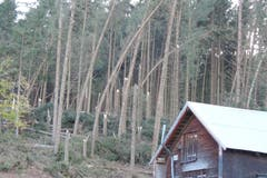 Der Sturm hat in diesem Waldrand auf der «Lemerenwees» in Gontenbad zahlreiche Fichten geknickt. (Bild: pd)