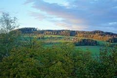 Der Stierenberg, beleuchtet von den letzten Sonnenstrahlen. in Rickenbach. (Bild: Josef Habermacher, 31. Oktober 2018)