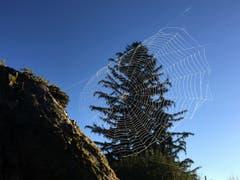 Spinnen sind wahre Künstler. (Bild: Toni Sieber)