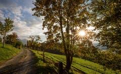 Auf dem Zugerberg lässt sich der Herbst blicken. (Bild: Daniel Hegglin (6. Oktober 2018))