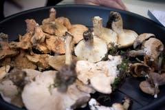 6 der 30 Kilogramm geprüften Pilze landen im Abfall. (Bild: Pius Amrein, Luzern, 8. Oktober 2018)