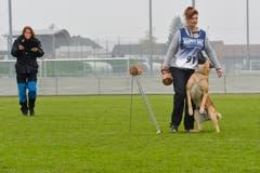 Weinfelden TG , 10.11.2018 / Schweizer Hundemeisterschaften in Weinfelden