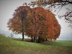 Unten grau und oben auf dem Golfplatz Dietschiberg so wunderschön bunt – es ist besonders beruhigend weil in dieser Zeit normalerweise kein Golfball «meh chunt»! (Bild Margrith Imhof-Röthlin (Luzern, 10. November 2018))