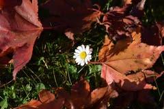 Der Frühling meldet sich im Herbst...(Bild: Josef Schönauer)