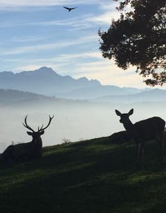 Wildtiere im Peter und Paul in Rotmonten. (Bild: Pia Siegrist)
