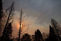 Brandschwarze Bäume und ein vom Rauch verdeckter Himmel. (Bild: Peter Dasilva/EPA (Paradise, 11. November 2018))