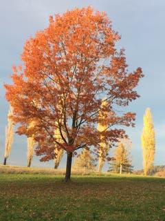 Herbstliches Farbenspiel in Scherzingen (Bild: Bruno Gresser)
