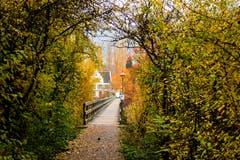Durch einen Blättertunnel erreicht man den Steg, der zur Klosterinsel Werd führt (Bild: Fritz Sigg)