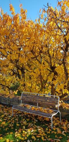 Herbstliches Laub besetzt die Sitzbank. (Bild: Josef Schönauer)