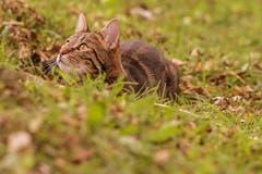 Warten auf die Maus... (Bild Franziska Hörler)