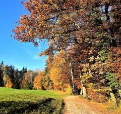 Der Herbst in seiner Pracht (Bild: Liliane Germann)