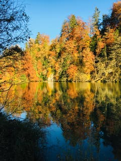 Herbst am Wichelsee zwischen Sarnen und Alpnach. (Bild: Beatrice Merz, 12. November 2018)