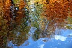 Der goldene Herbst spiegelt sich im Arboner Weiher. (Bild: Georg Rottmeier)