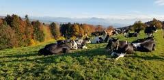 Sicht über das Seetal. (Bild: Toni Schleiss, 11. November 2018)