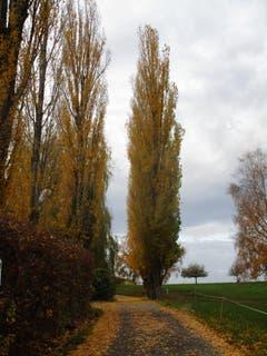 Herbststimmung beim Schlosswatt Mörschwil. (Bild: Franz Meier)