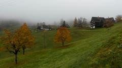 Feuchtkalter Novembertag in Blomberg. Apfelbaum und Kirschbäume sind noch voll im Herbstlaub. (Bild: Martin Giger)