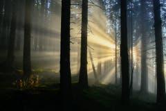 Wenn der Nebel der Sonne die Show stiehlt - oder umgekehrt. (Bild: Walter Huwiler (Fräkmüntegg, 16. November 2018))