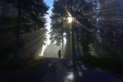 Urnäsch: auf dem Weg zur Hochalp Bild: Walter Schmidt)