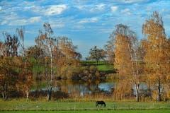 Idyllischer Schlossweiher im Herbstkleid in Untereggen. (Bild: Jeannette Gabathuler)
