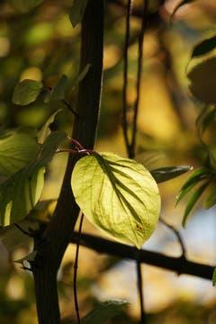 Herbstleuchten beim Gübsensee (Bild: Katharina Nagy)