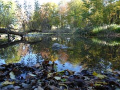 Wunderbares Herbstwetter am Bodelose Weiher in Münchwilen. (Bild: Stephan Lendi)